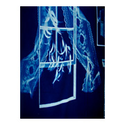 Blueprints Cotton Cyanotype Fabric